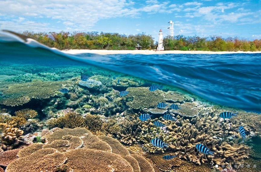 Ecotourism Lady Elliot Island Lady Elliot Island Eco