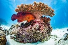 Diving and Manta Rays