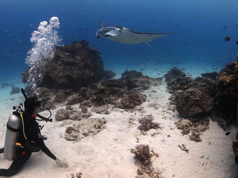 Diving-with-manta-rays