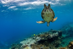 Snorkelling and Turtles