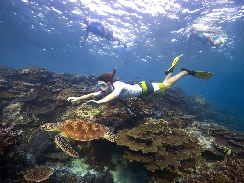 Snorkelling-with-turtle-Tourism-Australia