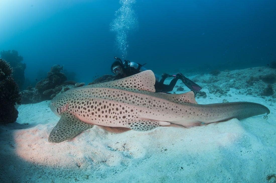 Diving On Lady Elliot Island Lady Elliot Island Eco Resort Great Barrier Reef