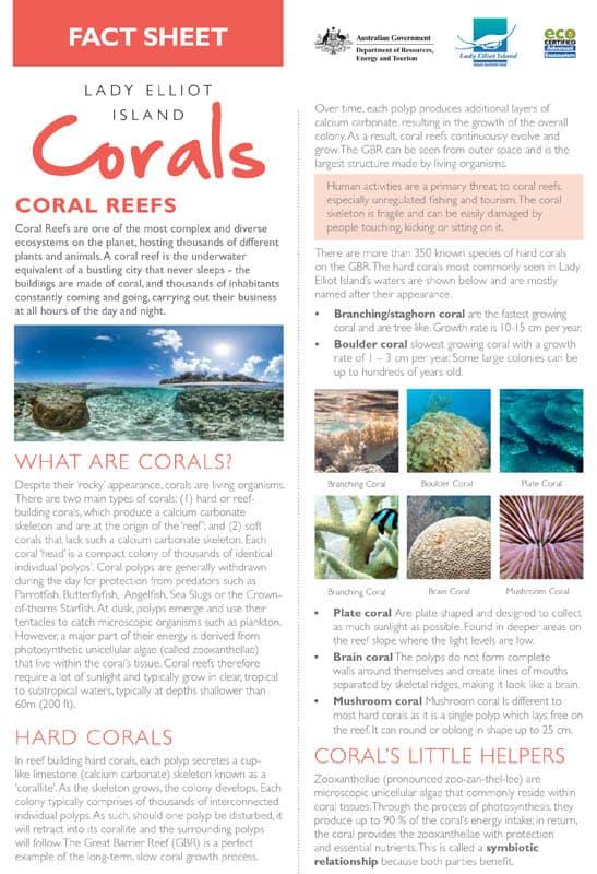 Coral Fact Sheet