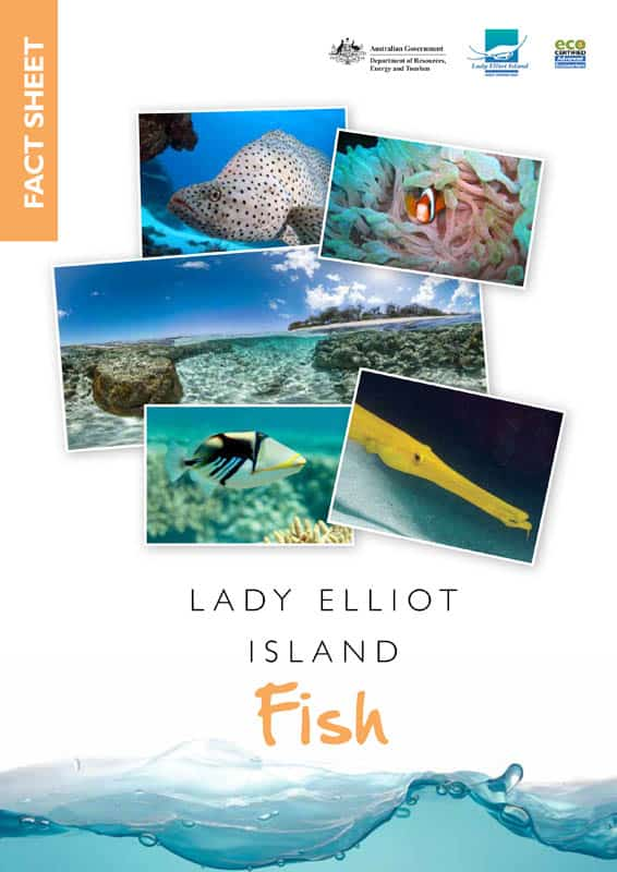 Fish Fact Sheet
