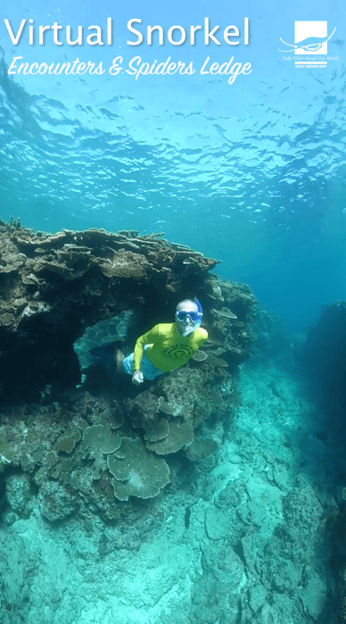 Lady Elliot Island Virtual Tour - Snorkel